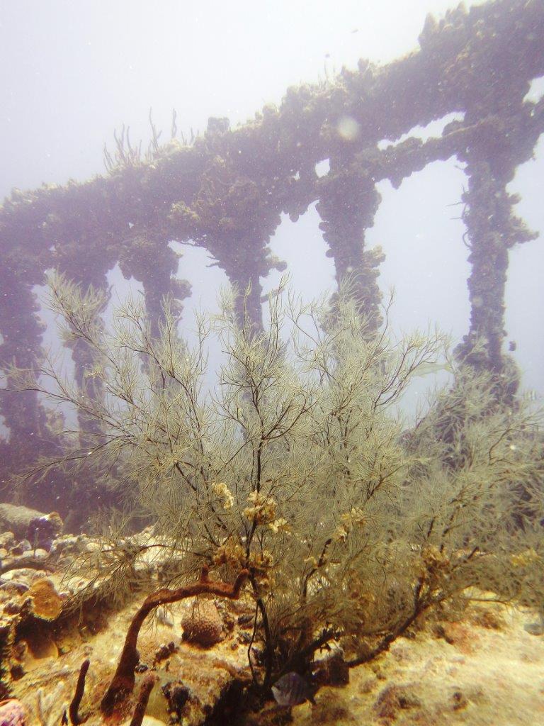 4 Salt Island Rhone beams
