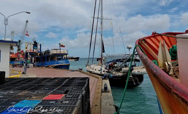 The dreaded fishing dock