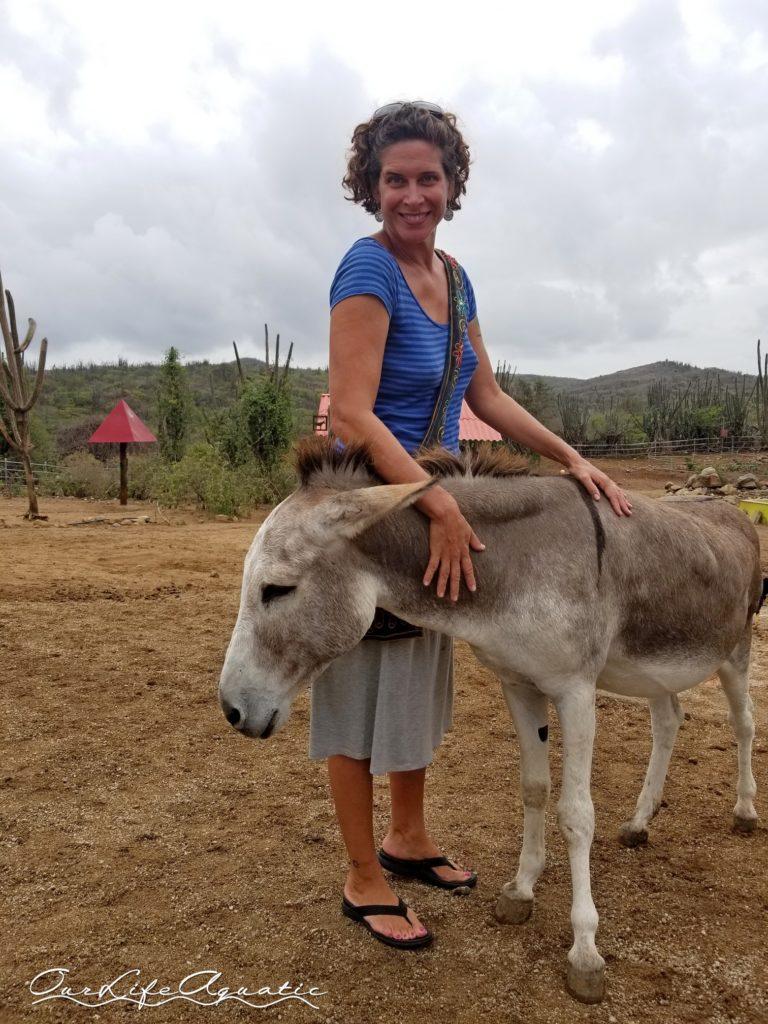 We had to visit the donkey sanctuary