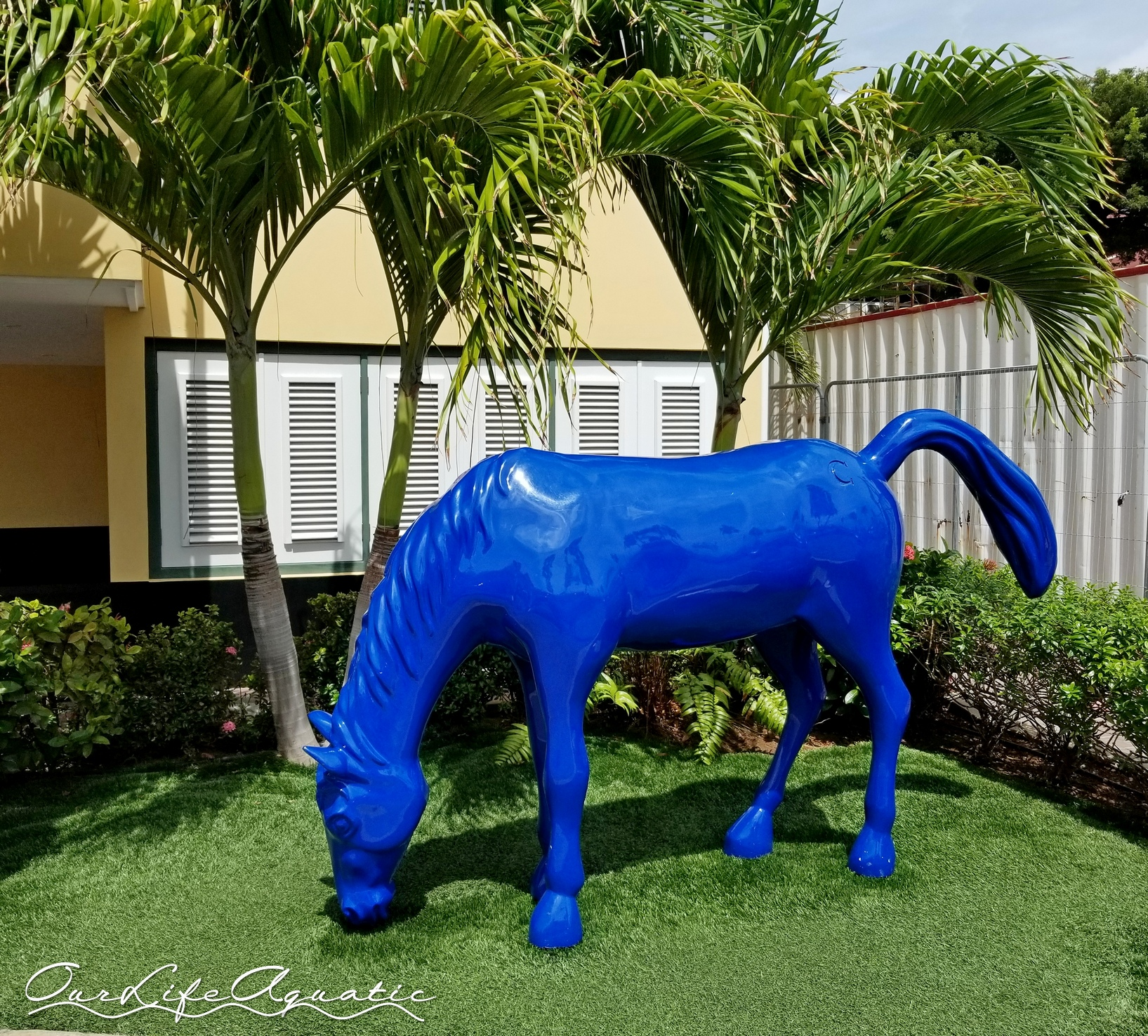 Blue horses are all over downtown Oranjestad