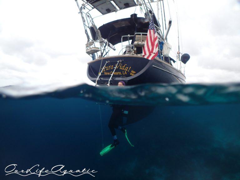 Diving right from ¡Pura Vida!