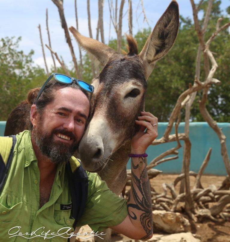BON - Donkeys (25)