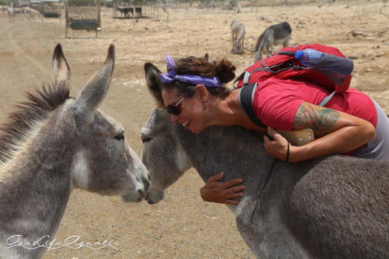 BON - Donkeys (59)