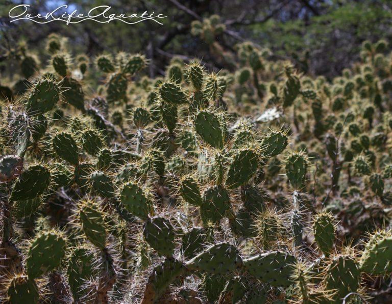 More pokey plants