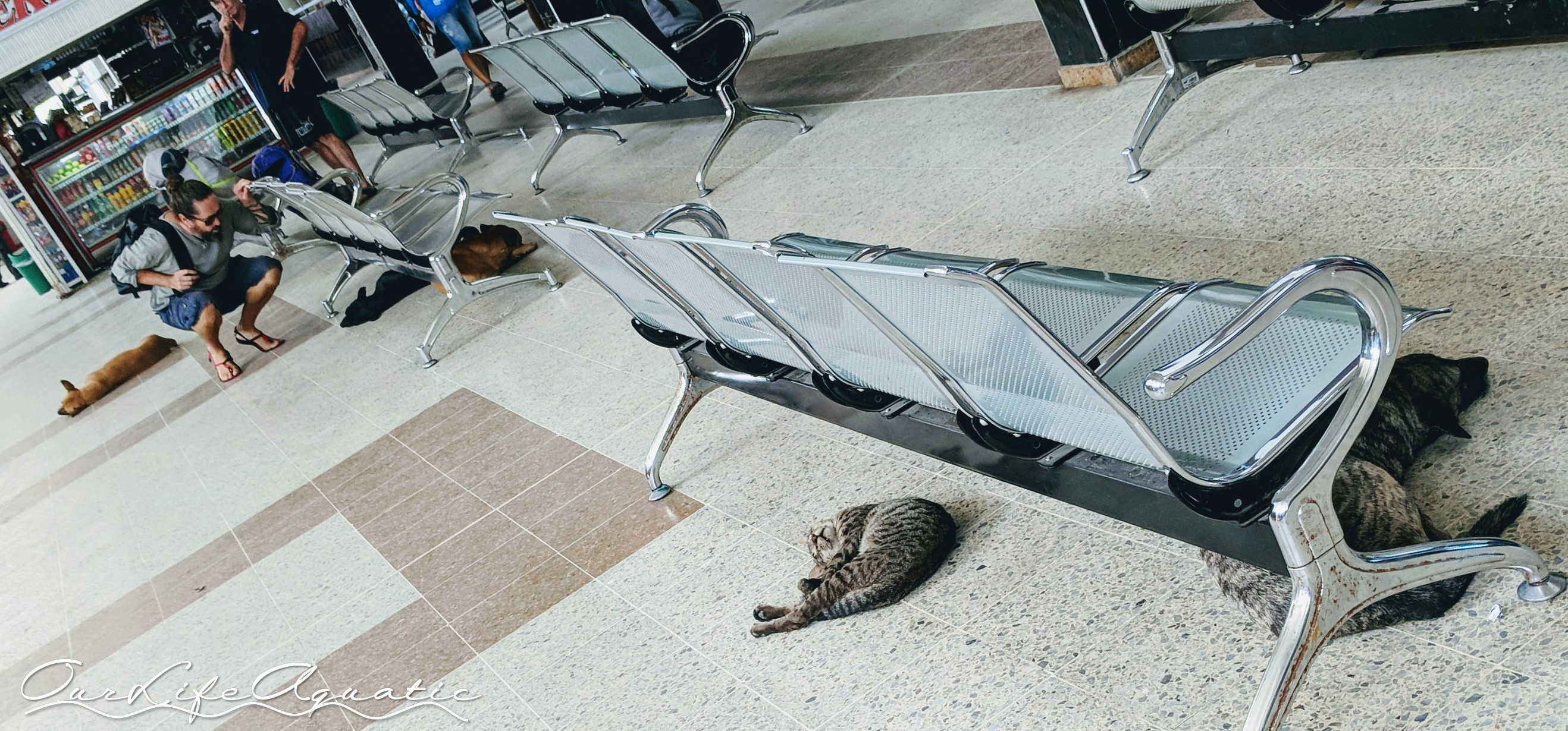 Bus station full of friendly critters