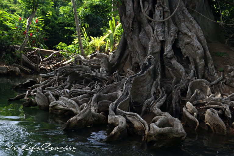 Remarkable roots