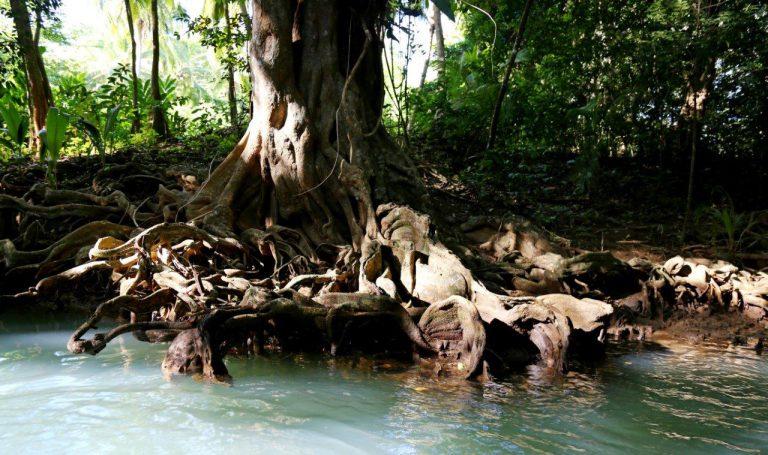 DOM - Indian River tour (4)