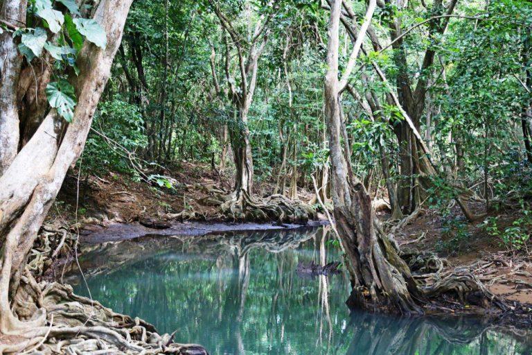 DOM - Indian River tour (5)