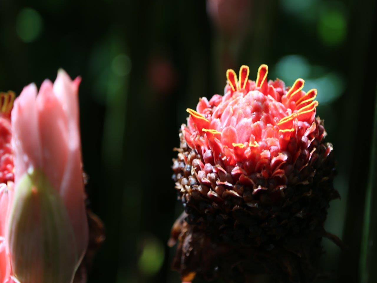 DOM - flora (2)