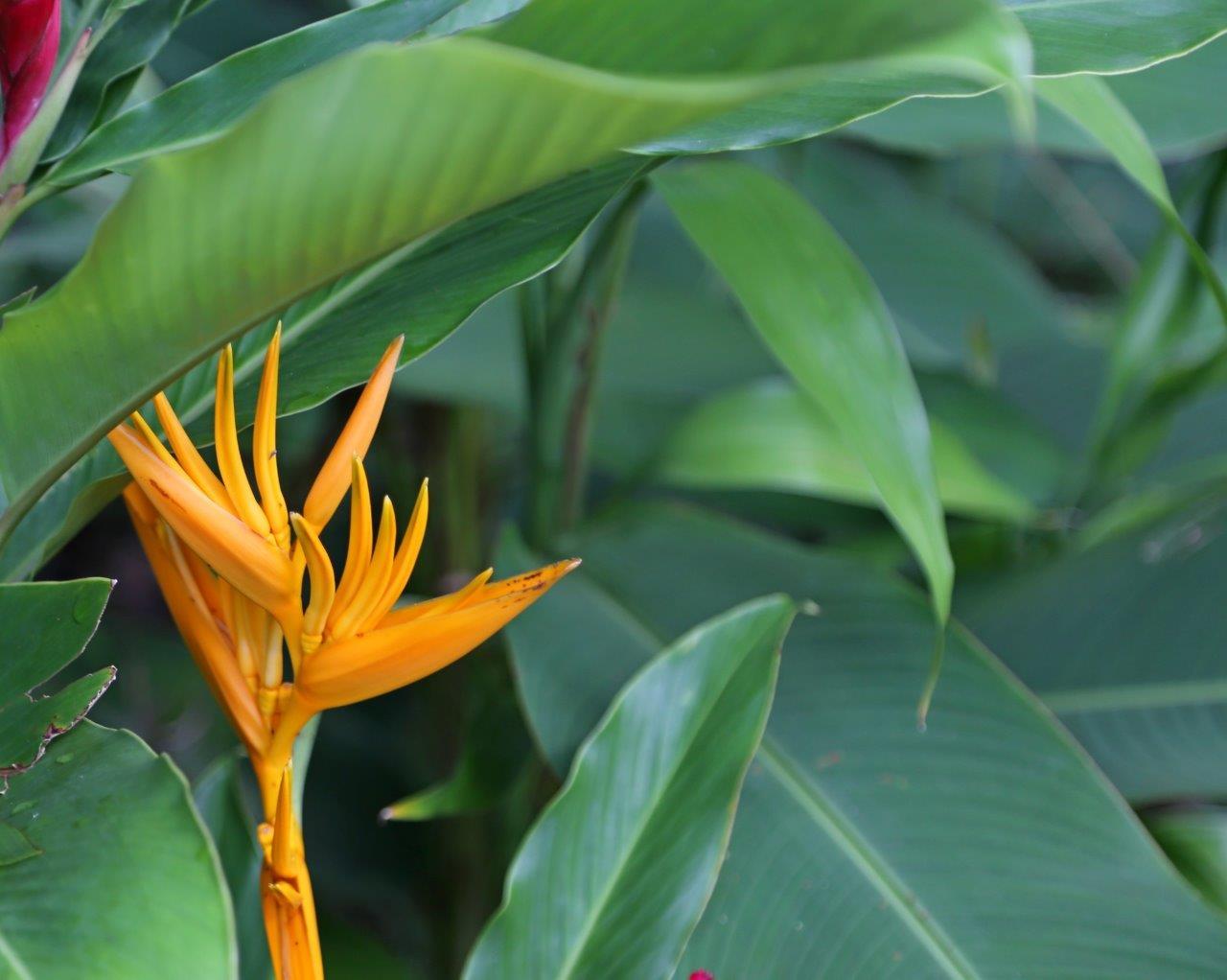 DOM - flora (4)