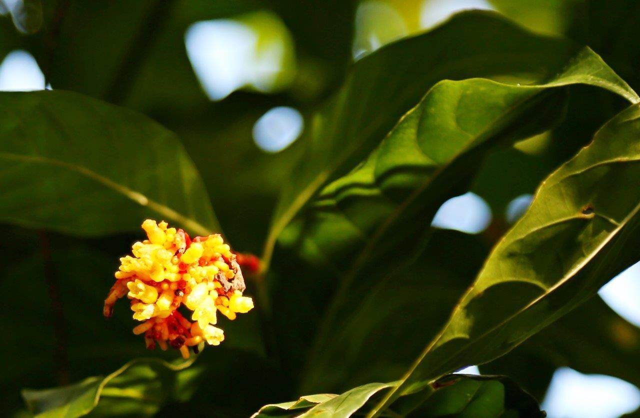 DOM - flora (7)
