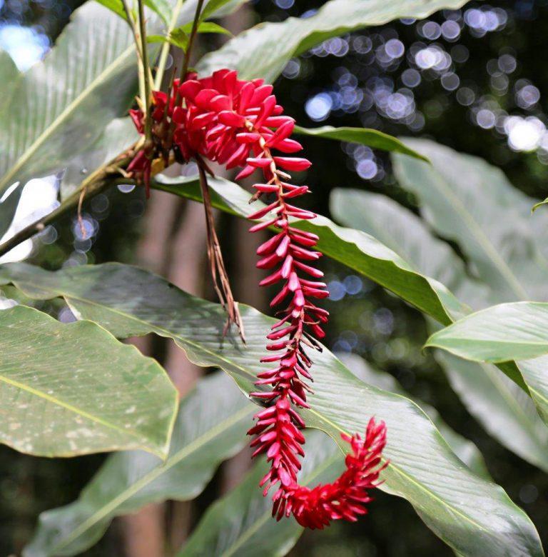 DOM - flora (8)