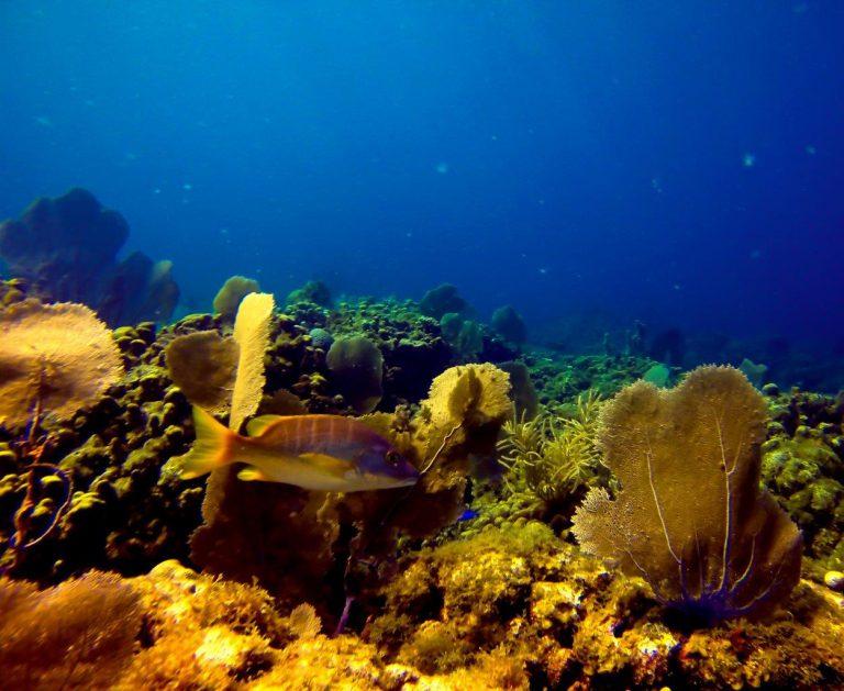 Dive - Tiktek (1)-1