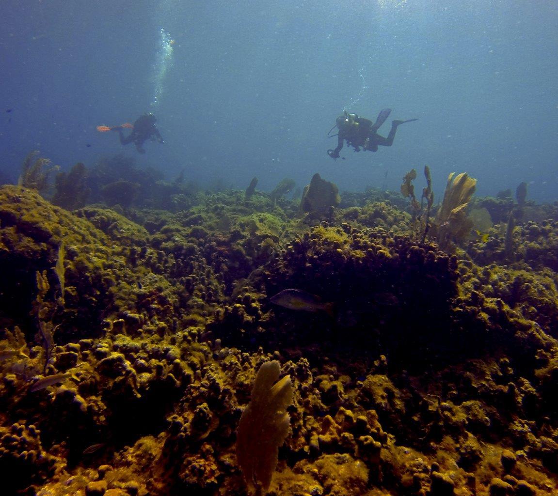 Dive - Tiktek (2)-1