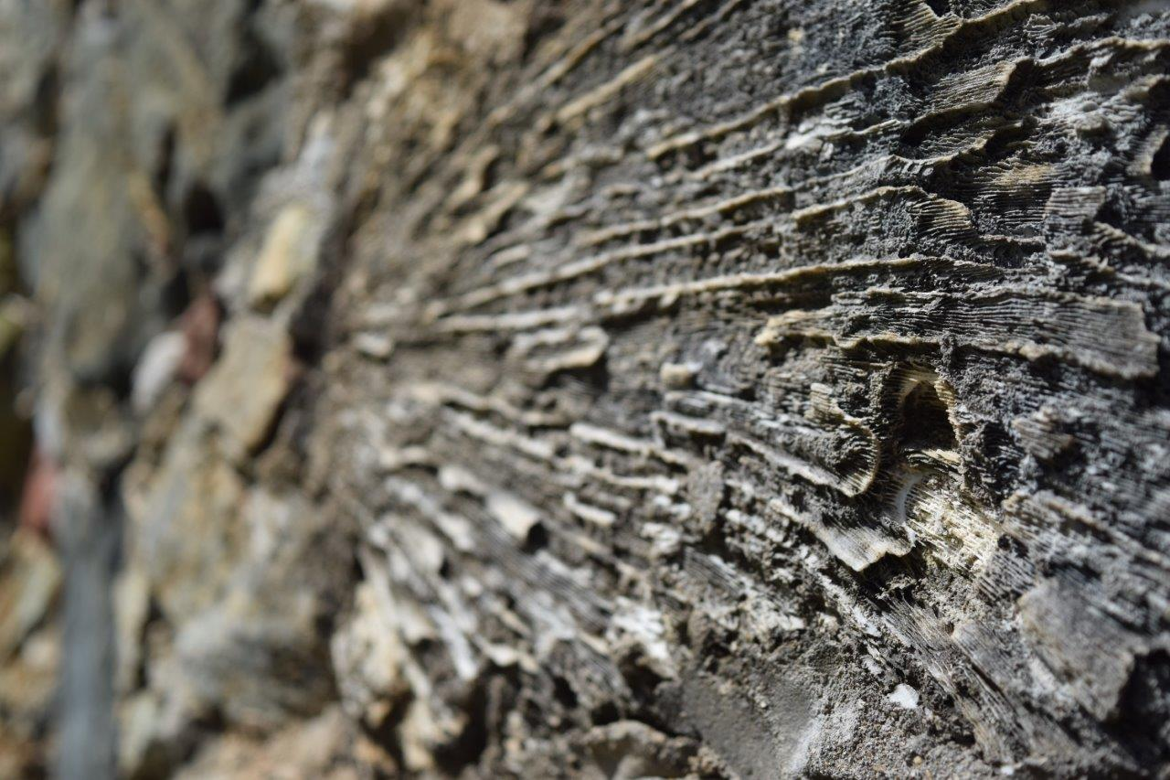 Texture of coral building blocks (Photo credit: Ashley Hoover)