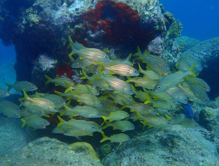 Reefs are full of life at Jacques Cousteau Underwater Reserve