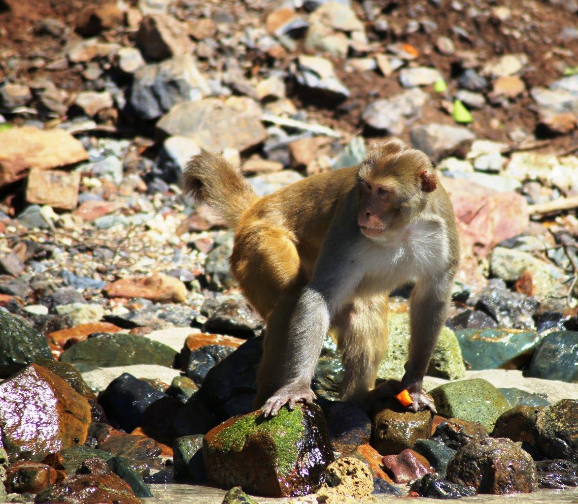 monkey-island-16
