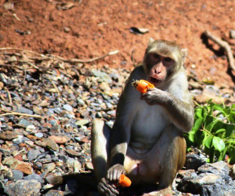 monkey-island-9