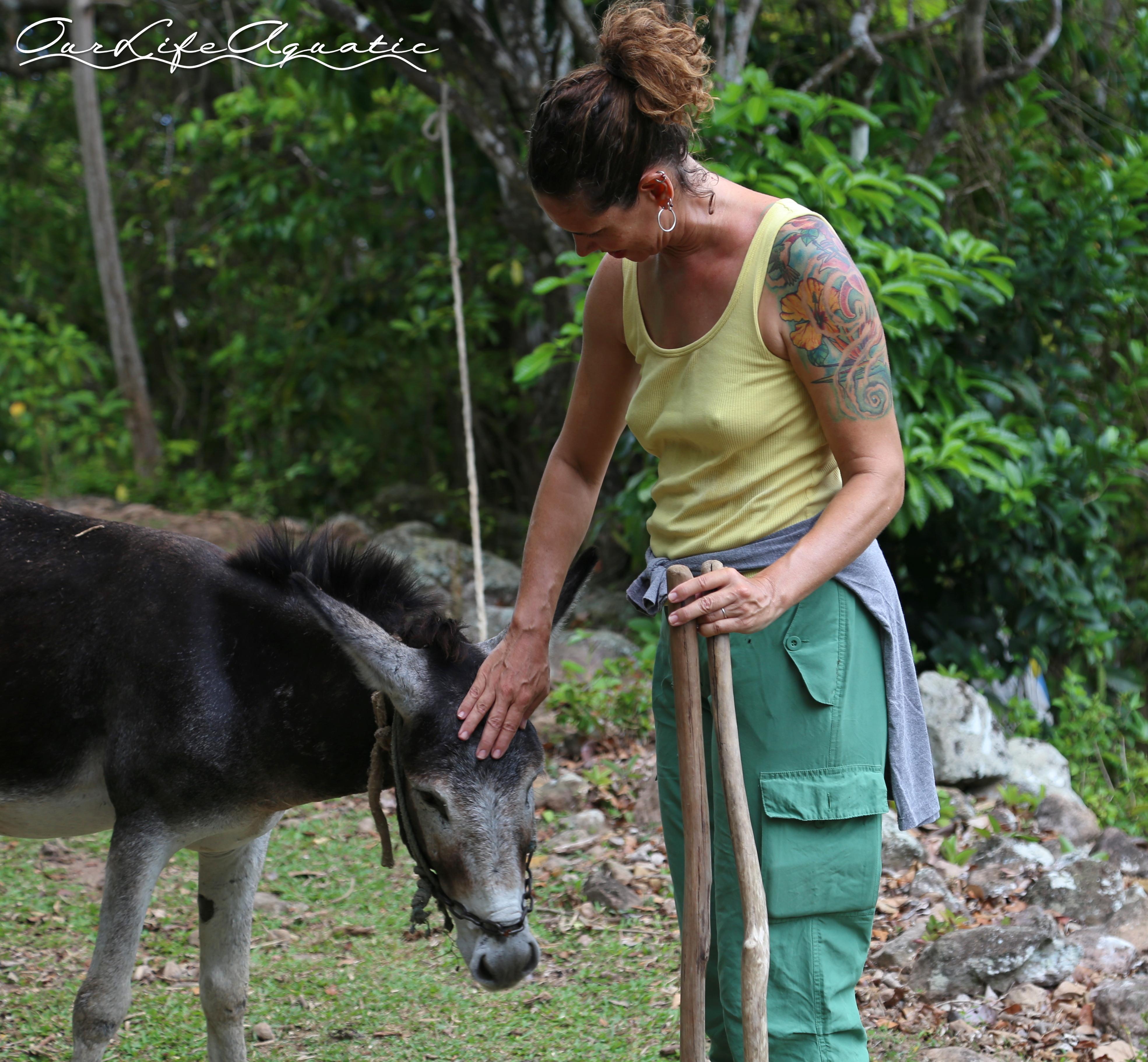 Friendliest donkey ever!