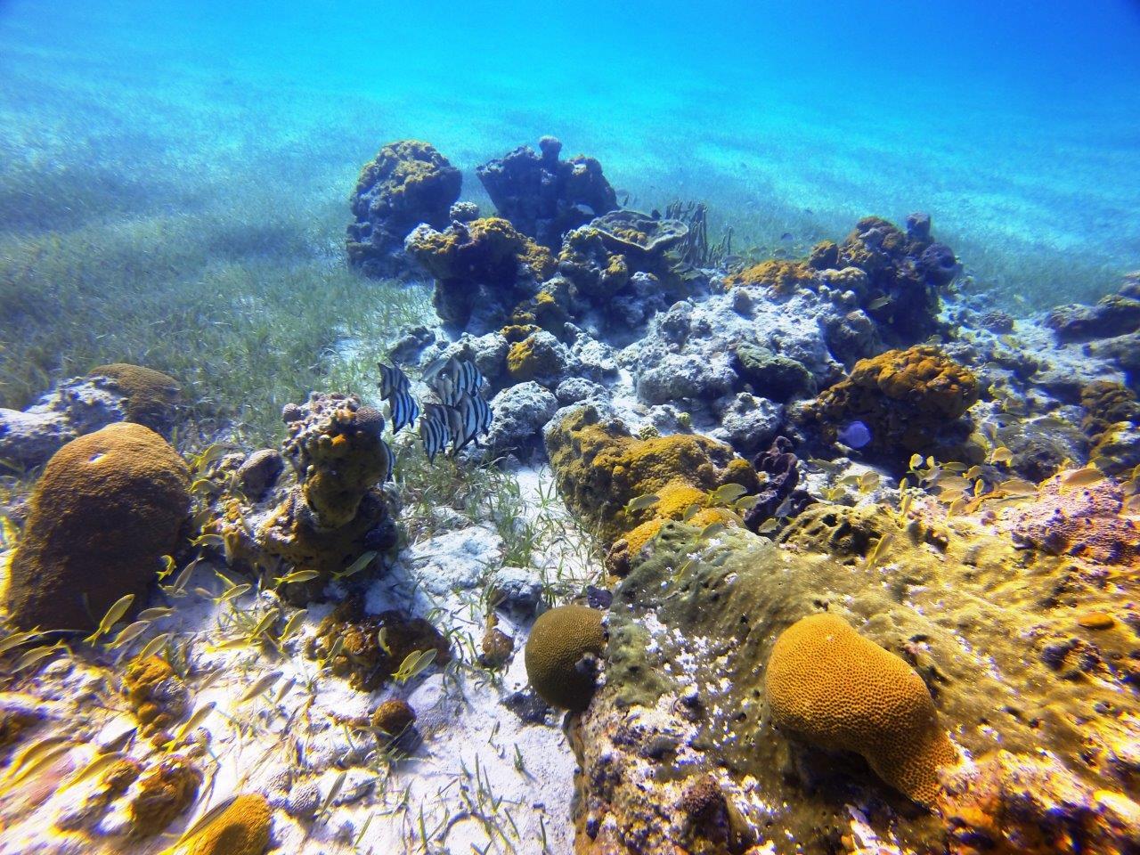 Reefs at Hawksbill Cay