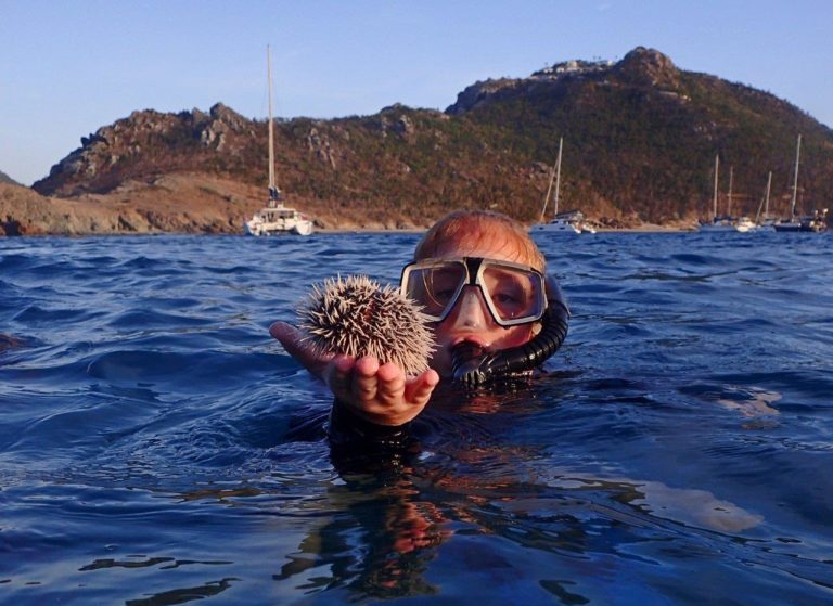 Found an urchin while snorkeling