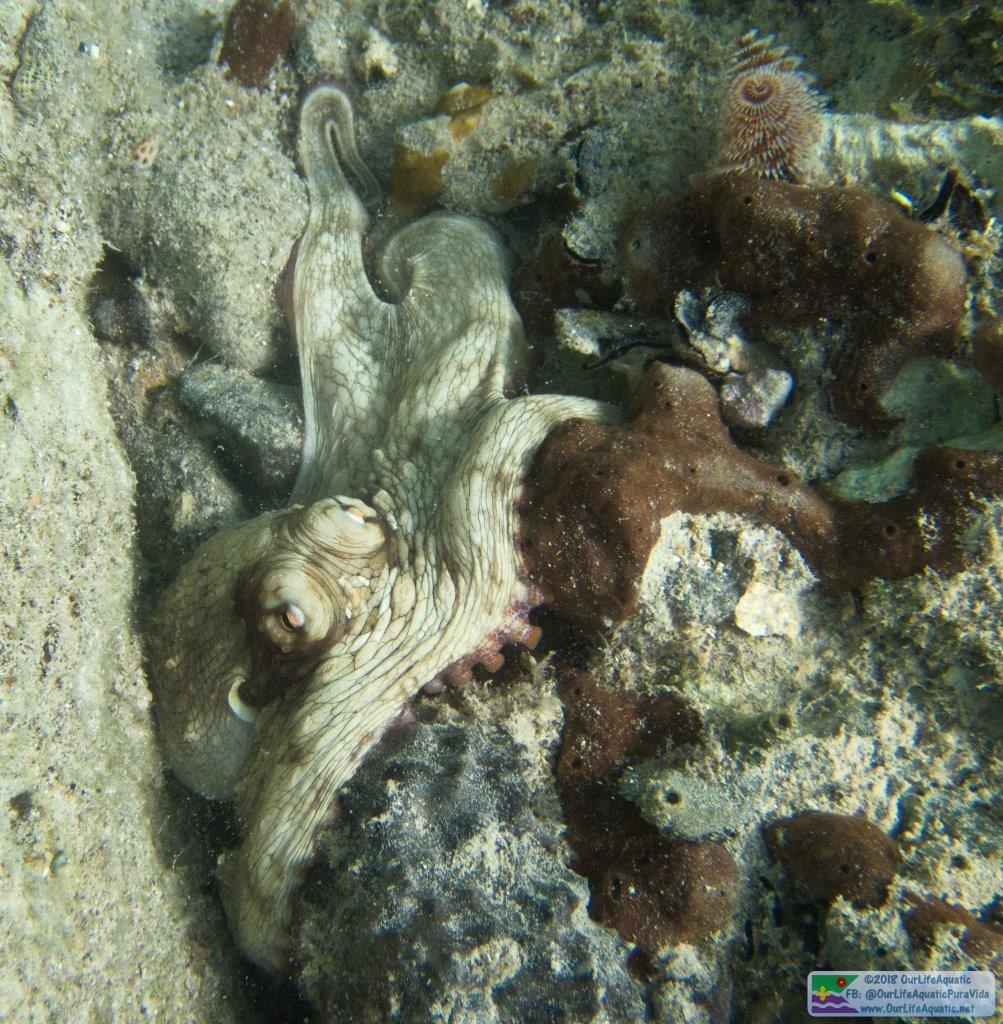 STT-BVI_Ashley_Visit_Octopus-S.jpg