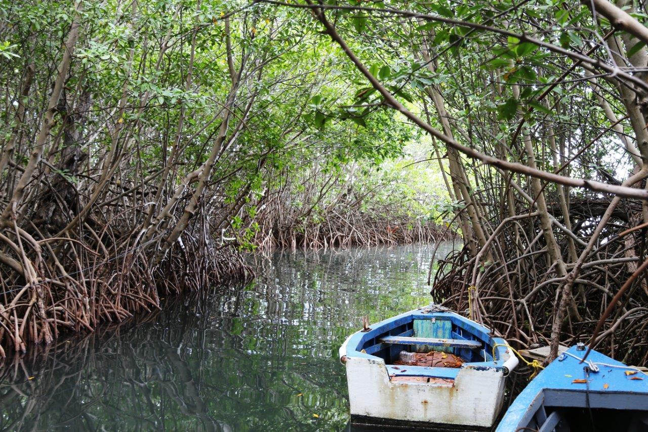 salinas-mangrove-boats