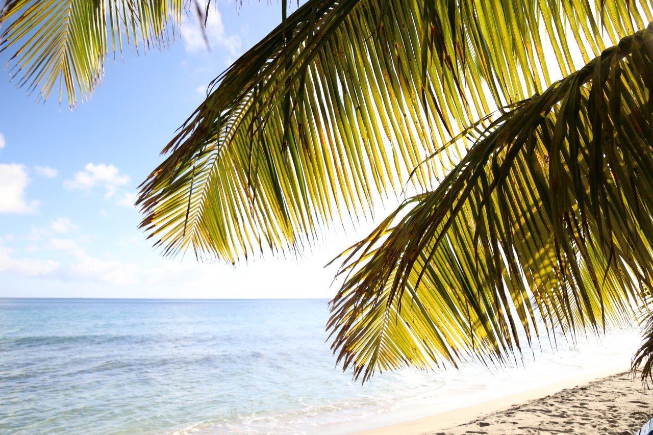 St Kitts - Sipwreck and Carambola (87)